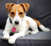Personalised Dog ID Tag - Adventure Awaits